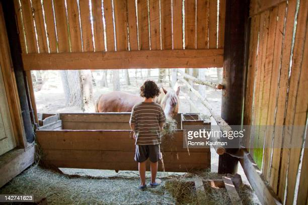 Caucasian boy feeding horse on farm
