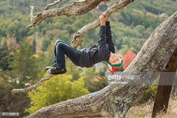 Caucasian boy hanging upside-down on tree branch