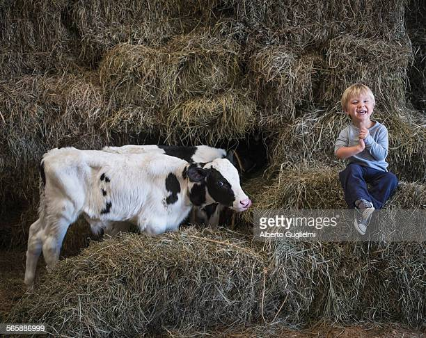 Caucasian boy laughing on haystacks near cows