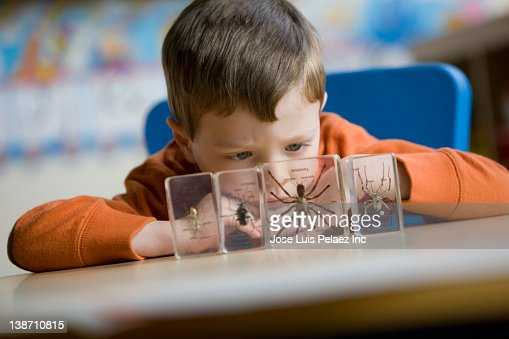Caucasian boy looking at spider in classroom : Stock Photo