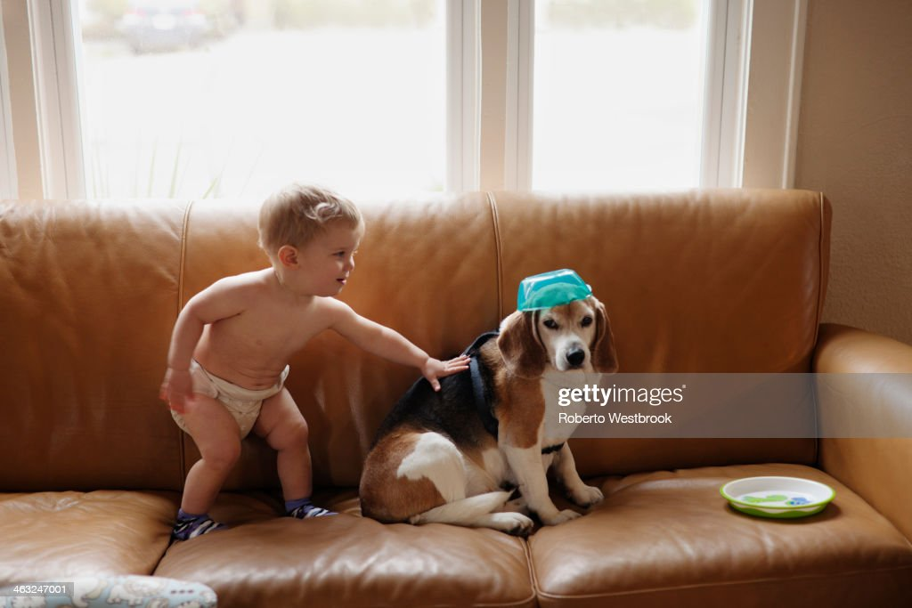 Caucasian boy playing with dog on sofa