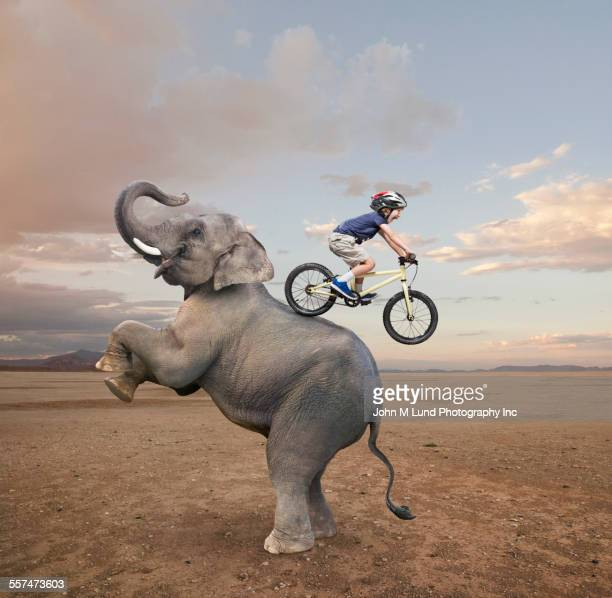Caucasian boy riding mountain bike on back of elephant
