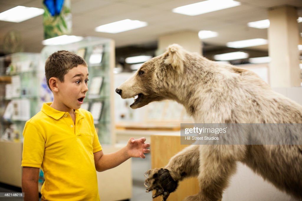 Caucasian boy surprised by stuffed bear in museum