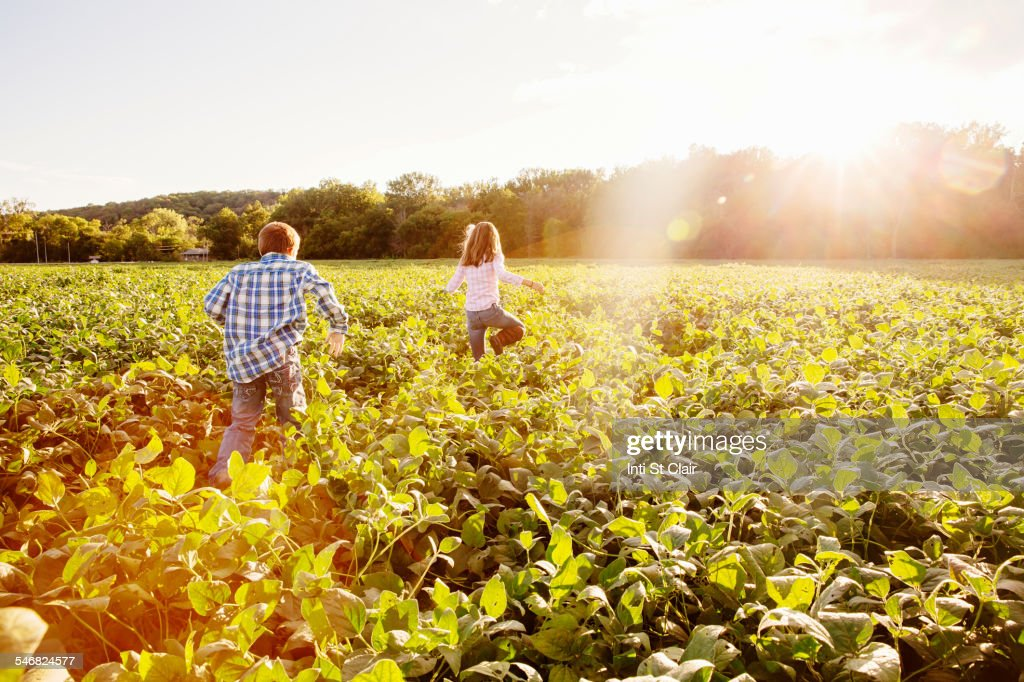 Caucasian children walking in crop field on farm