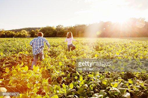 Caucasian children walking in crop field on farm