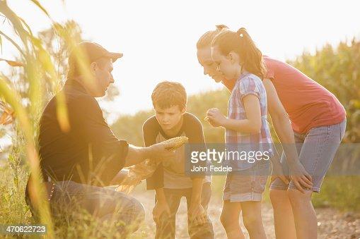 Caucasian family examining corn crop on farm