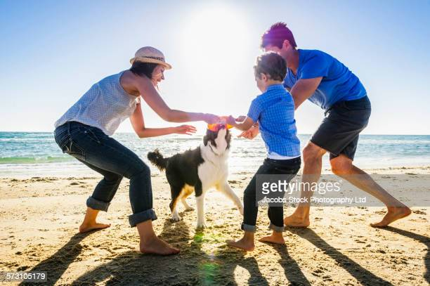 Caucasian family playing with dog on beach