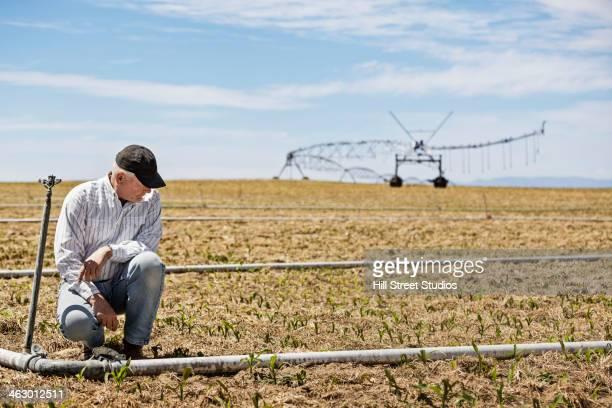 Caucasian farmer examining crop
