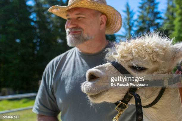 Caucasian farmer standing with alpaca on farm