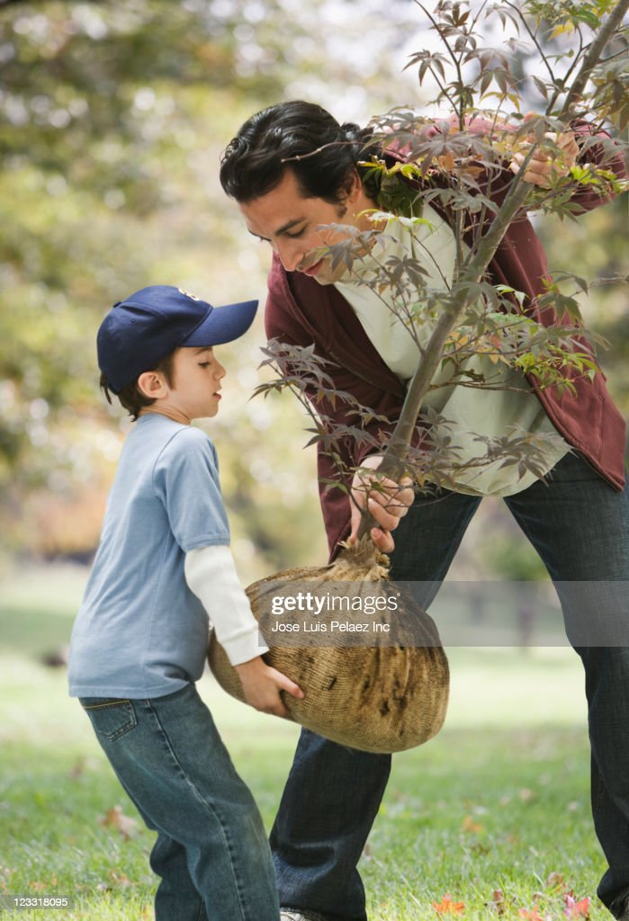 Caucasian father and son planting sapling tree