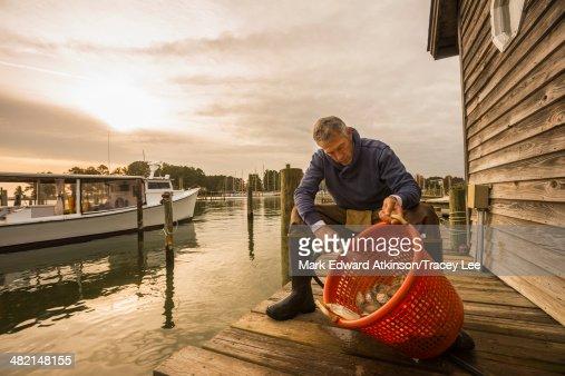 Caucasian fisherman washing catch in basket on dock