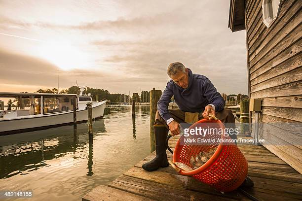 Caucasian fisherman washing catch in basket on dock