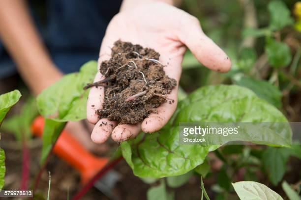 Caucasian gardener holding clump of dirt