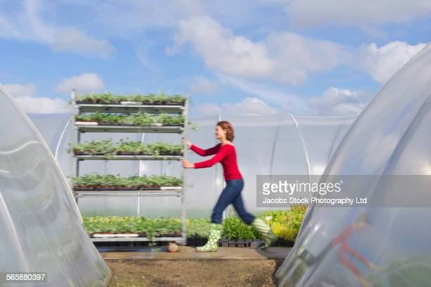 Caucasian gardener pushing cart of plants in greenhouse
