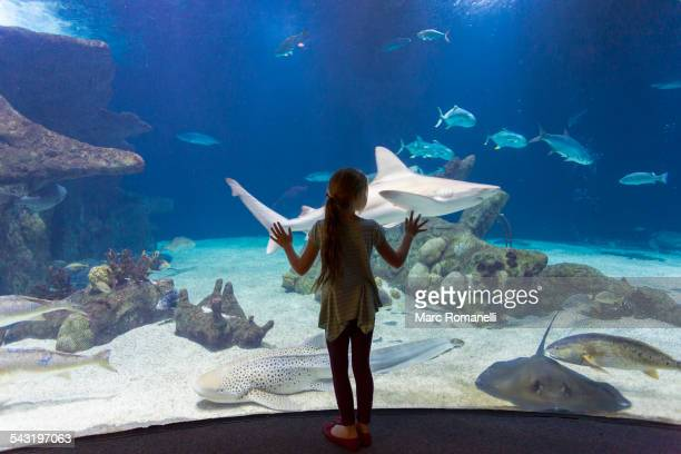Caucasian girl admiring fish in aquarium