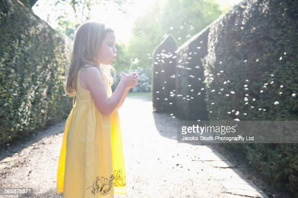 Caucasian girl blowing on dandelion in garden