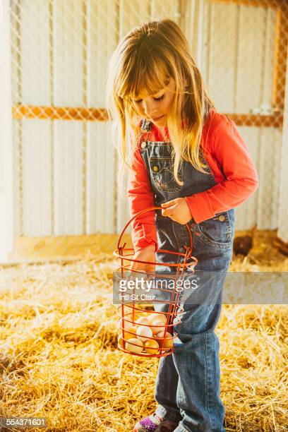 Caucasian girl collecting eggs in barn
