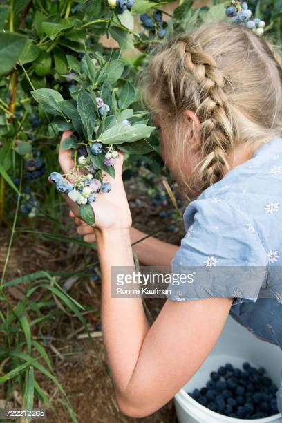 Caucasian girl picking blueberries