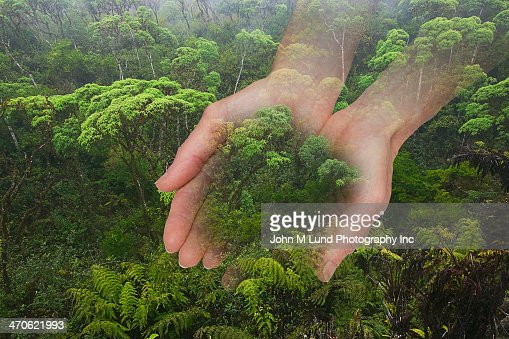 Caucasian hands cupping rainforest
