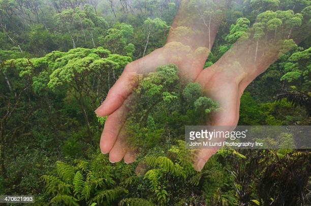 Caucasian hands cupping rainforest