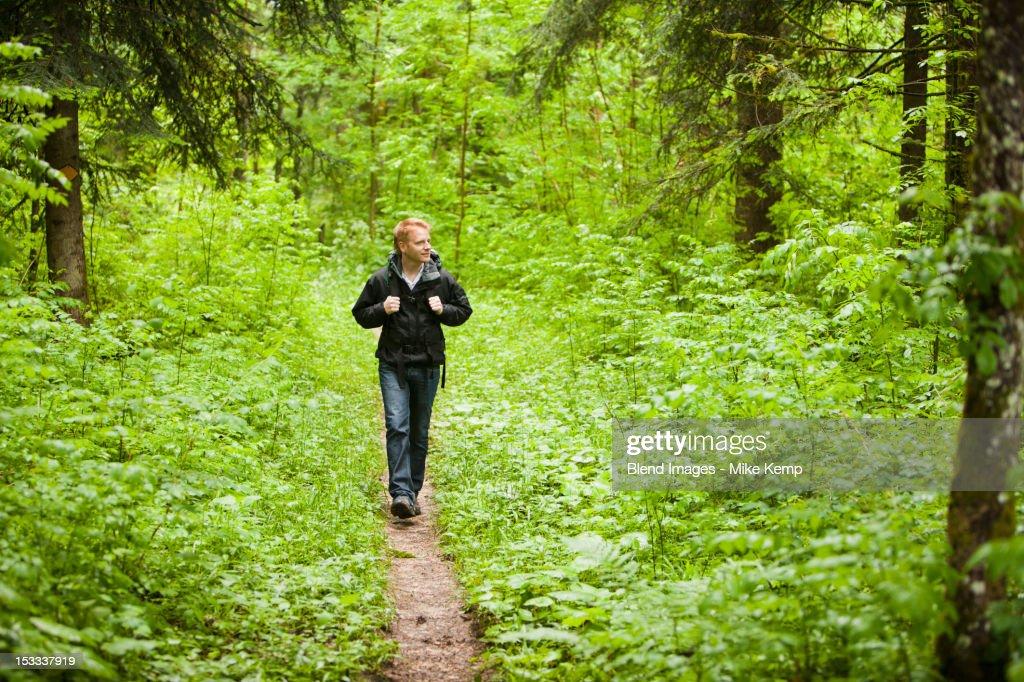 Caucasian man hiking in woods : Stock Photo