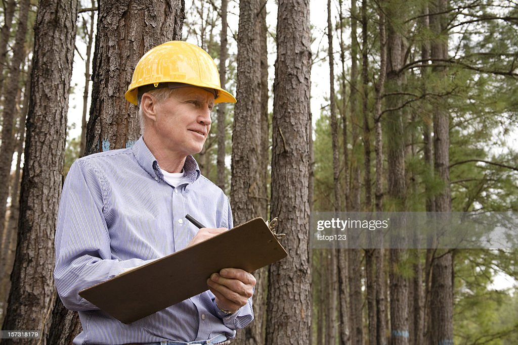 Caucasian Man wearing hardhat and studying environmental conservation burned forest