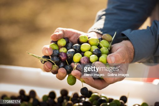Caucasian man with handful of olives