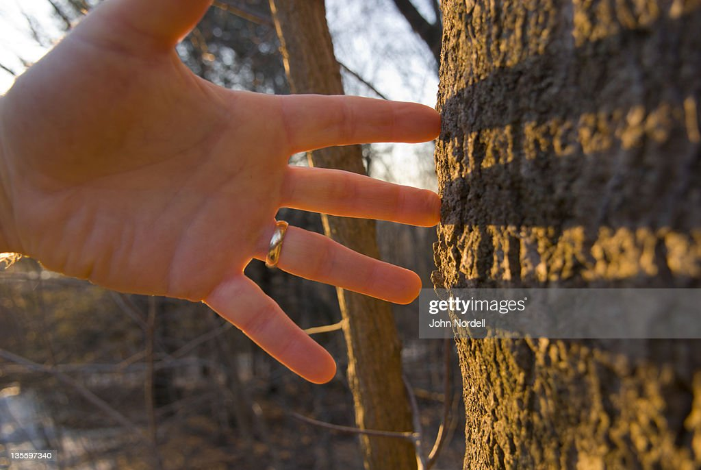 Caucasian mans hand touching tree bark : Stock Photo