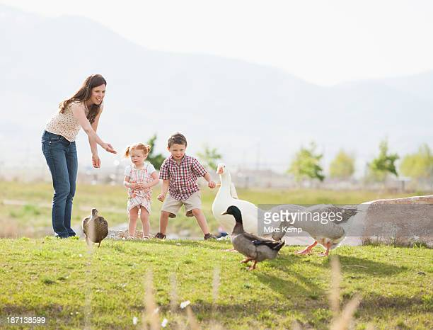 Caucasian mother and children feeding ducks and geese