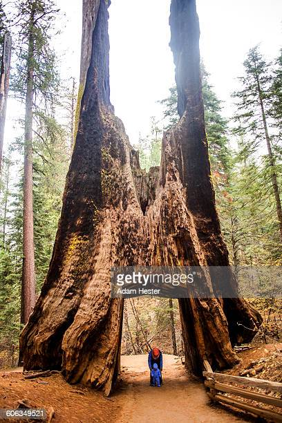Caucasian mother and daughter under ancient tree in Yosemite National Park, California, United States
