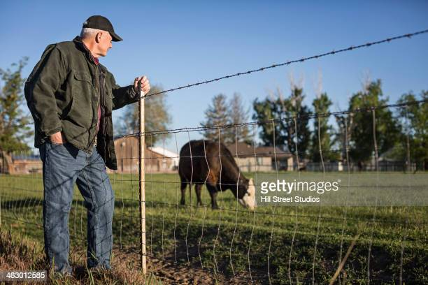 Caucasian rancher watching cow in field