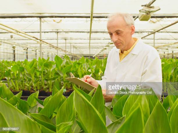Caucasian scientist examining green plants in greenhouse