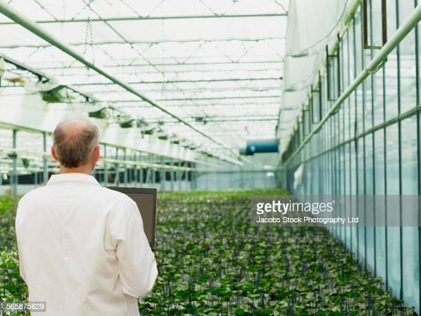 Caucasian scientist holding laptop examining plants in greenhouse