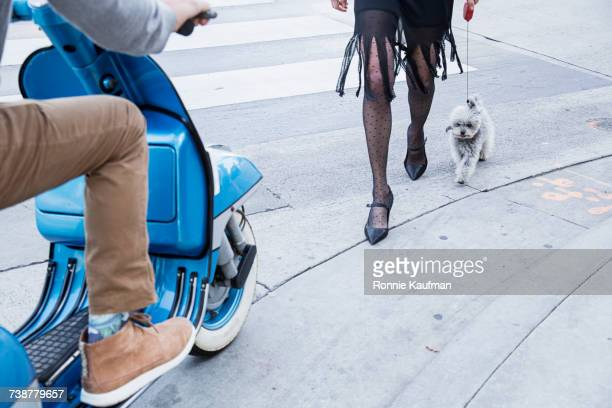 Caucasian woman and dog crossing street near man on scooter