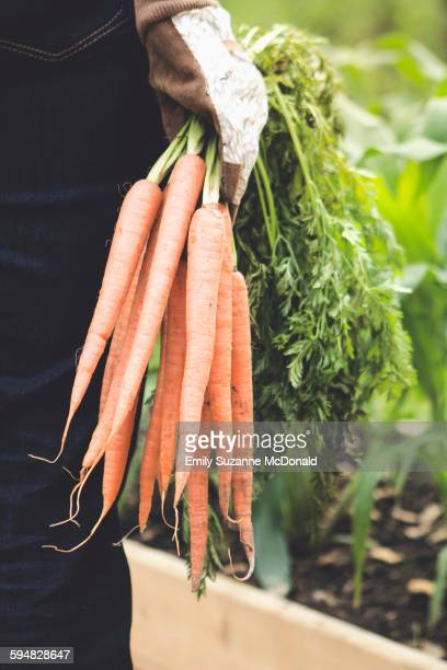Caucasian woman holding carrots in garden