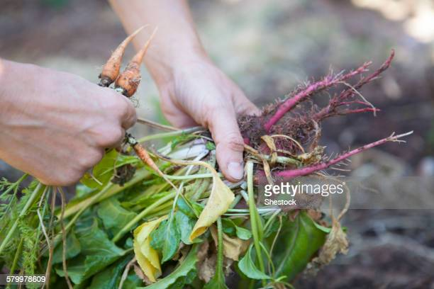 Caucasian woman holding fresh vegetables in garden
