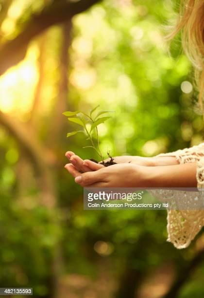 Caucasian woman holding seedling in woods