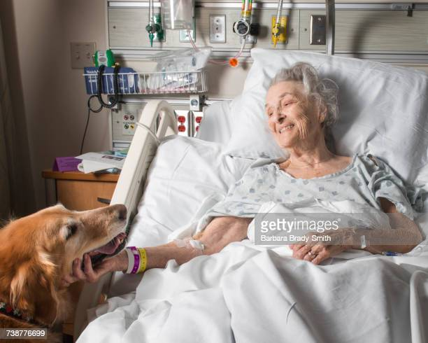 Caucasian woman in hospital petting therapy dog