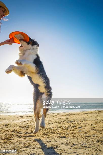 Caucasian woman playing with dog on beach