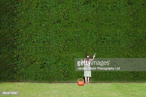 Caucasian woman trimming enormous hedge
