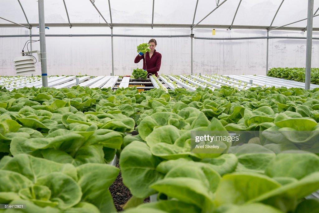 Caucasian woman working in greenhouse