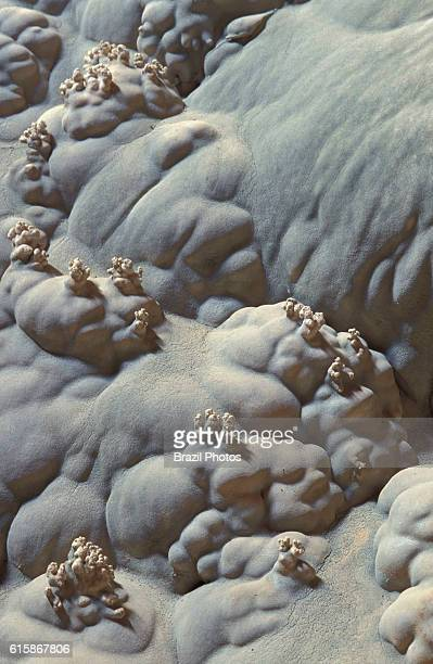 Cauliflowers are some of the strange forms created by the precipitation of calcium carbonate onto the cave floor at Janelao cave in Peruacu Karst...