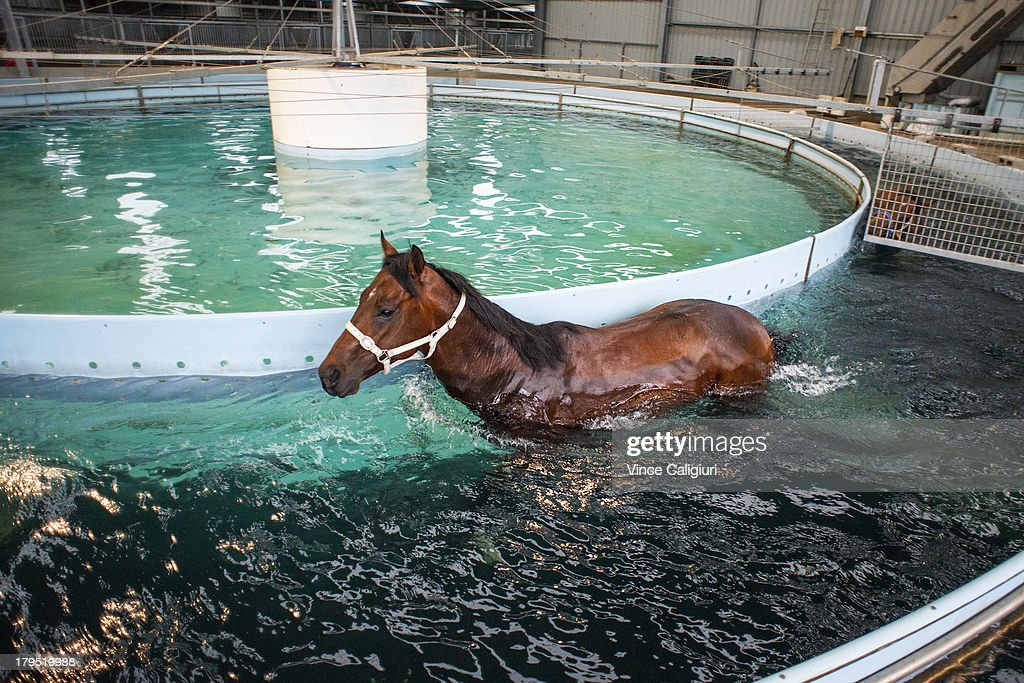 Cauthen walks in the lap pool after trackwork at Talwood Park on September 5, 2013 in Melbourne, Australia.