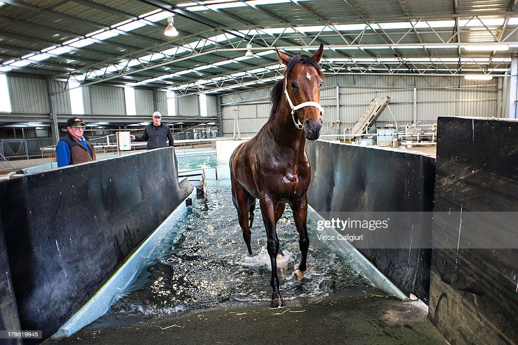 Cauthen walks out of the lap pool after trackwork at Talwood Park on September 5, 2013 in Melbourne, Australia.