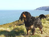 Cavalier King Charles Spaniel Standing On Cliff By Sea Against Sky