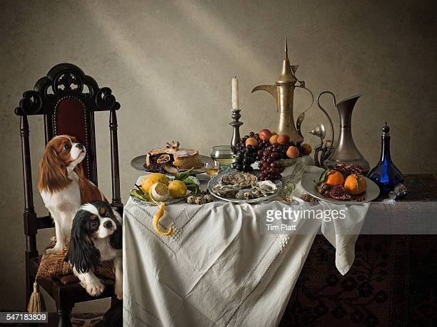 Cavalier King Charles Spaniels and dining table.