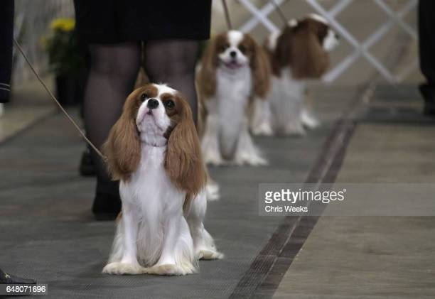 Kennel Club Of Beverly Hills Dog Show