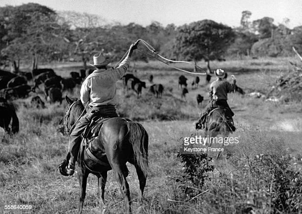 Cavaliers travaillant dans une ferme coopérative nationalisée qui détient plus de 12 400 bovins à Cuba circa 1960
