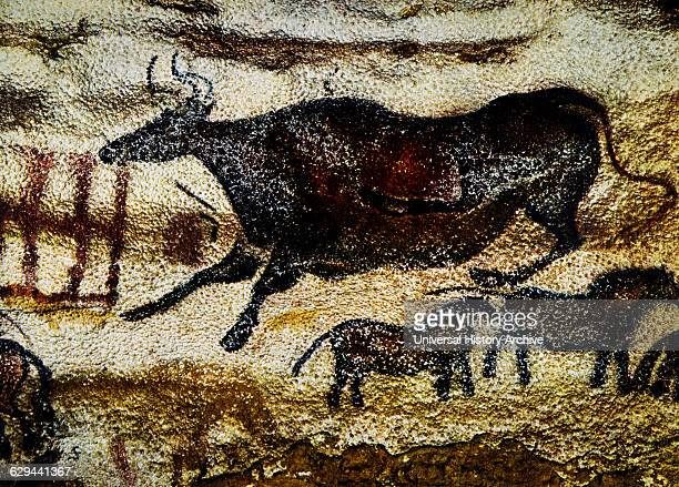 Cave Painting of Cow Horses Lascaux France