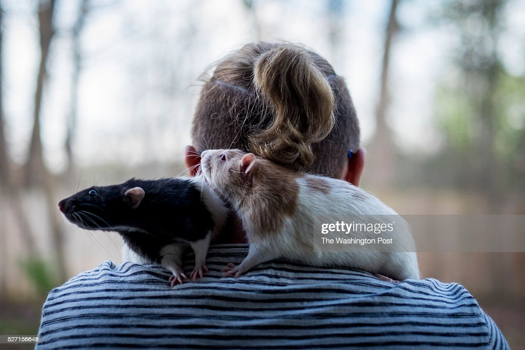 Cayden McDonald poses with his rats Edgar and Allan at his home in Woodbridge Va McDonald is a transgender teen and senior at GarField High School in...